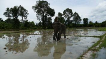 słon w wodzie