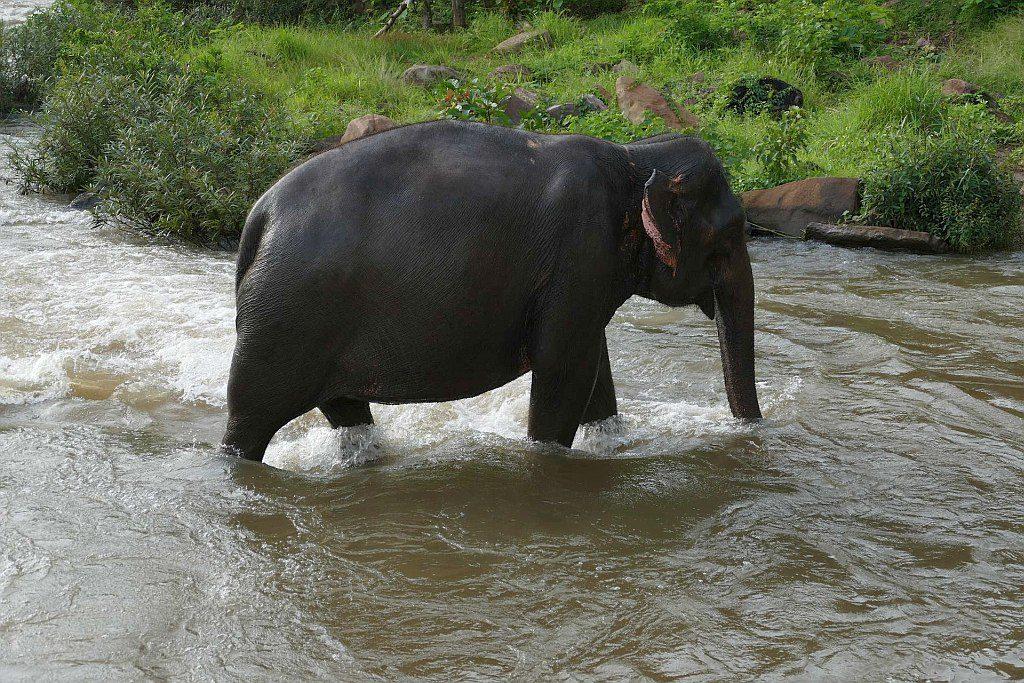 kąpiel słonia