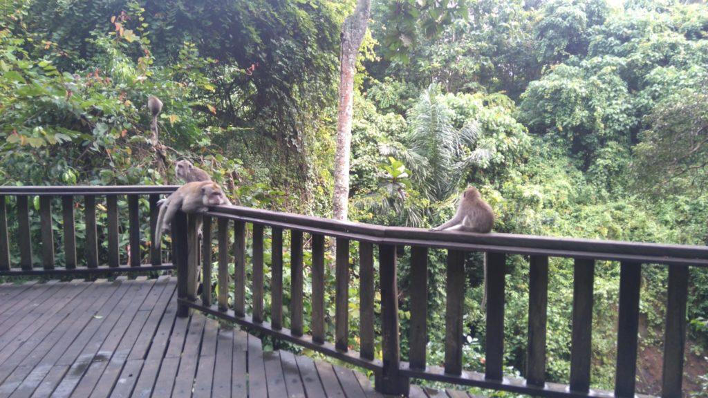małpi gaj