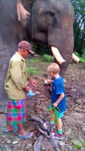 Michał karmi słonia