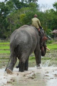 pa pa słoniu
