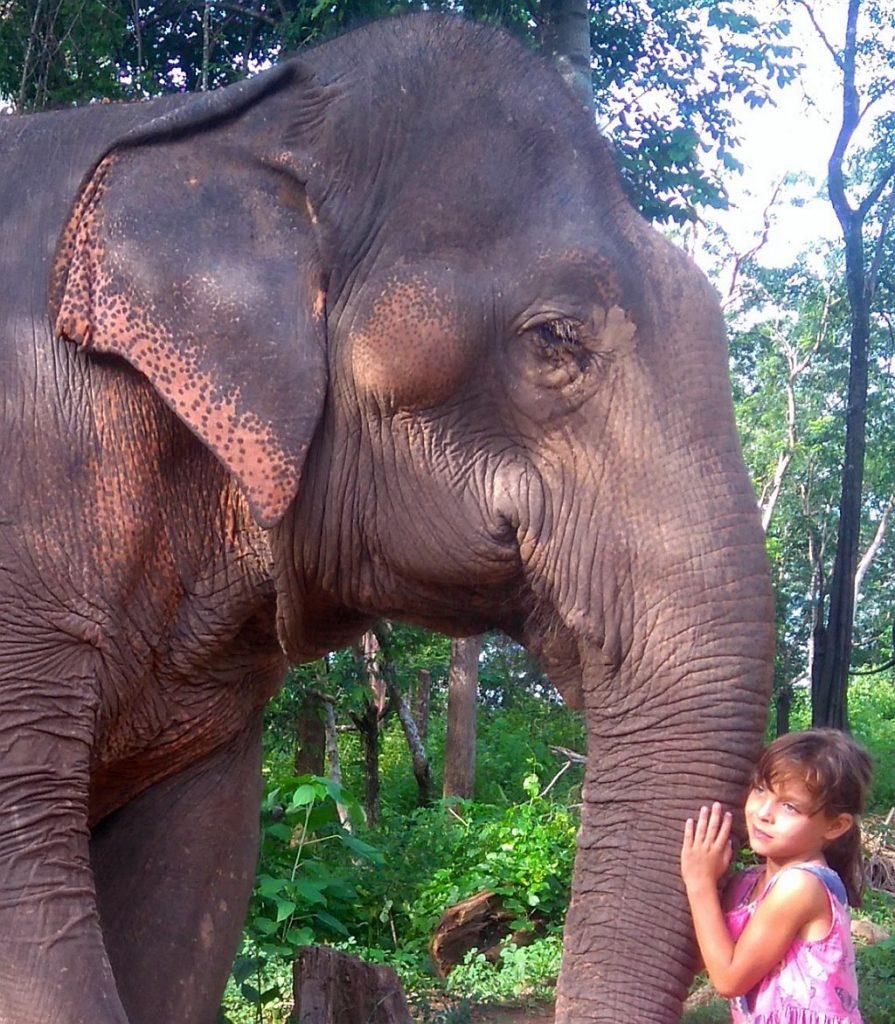 sloń azjatycki