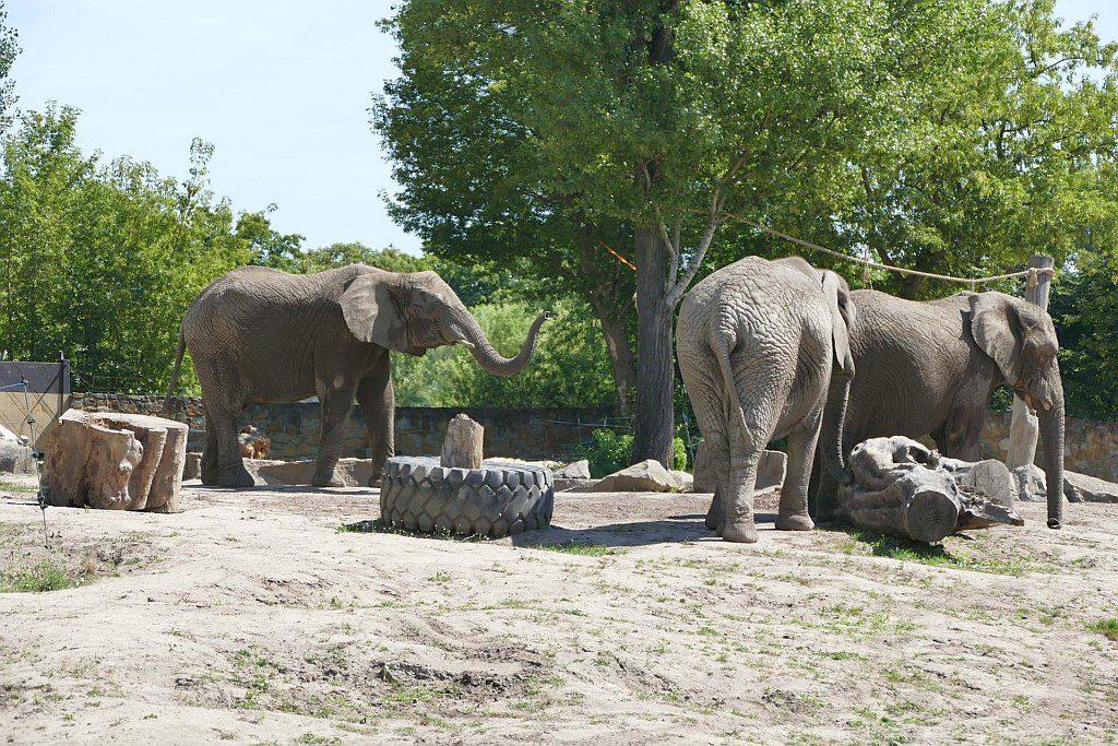 słonie wzoo