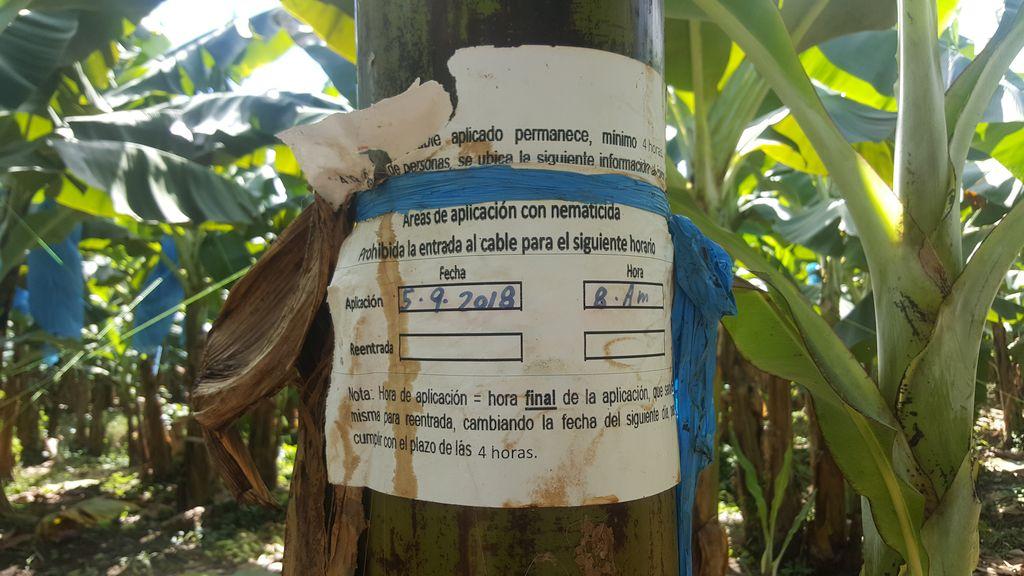 Kostaryka, banany, emisja dwutlenku węgla , pestycydy