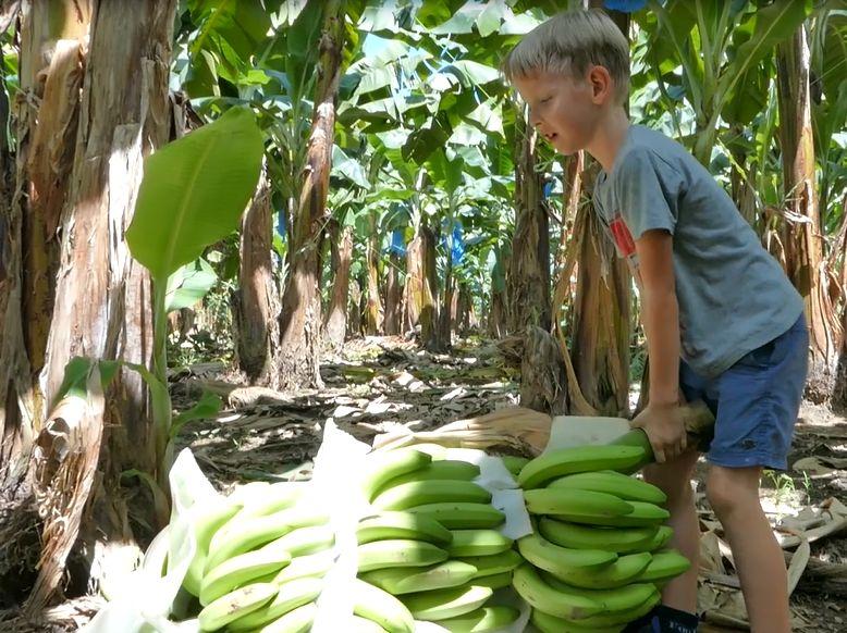 banany, plantacja, dziecko