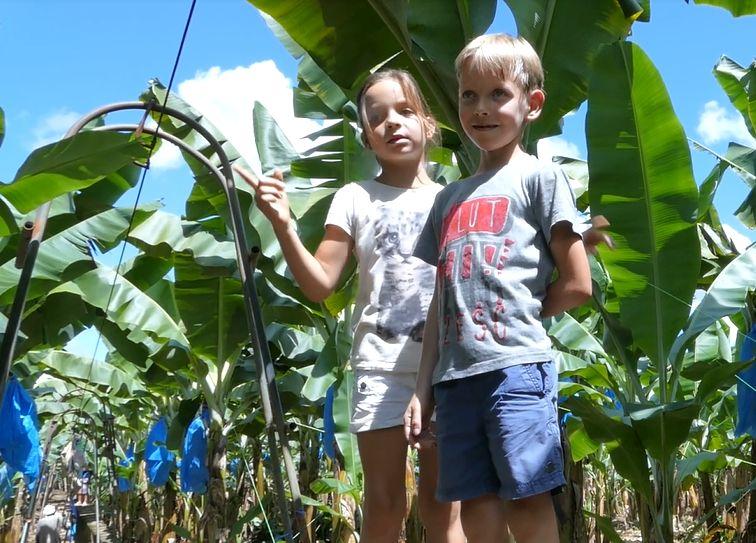 dzieci, banany, plantacja, droga