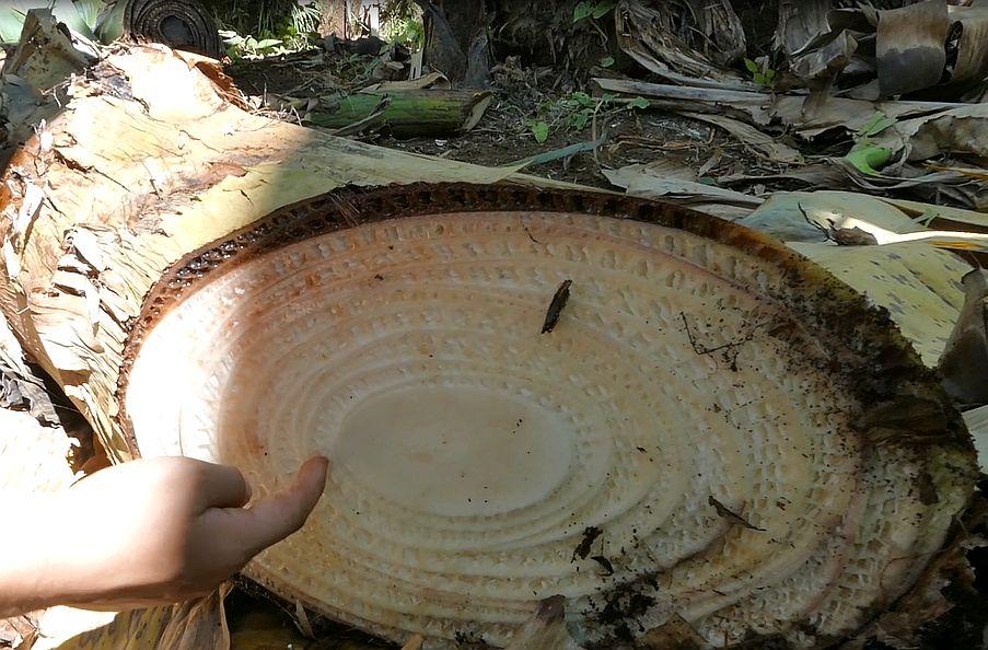 palma bananowa pościęciu, odpady, pestycydy