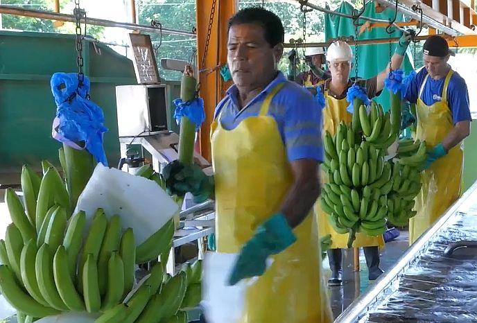 Kostaryka, banany, dzieci